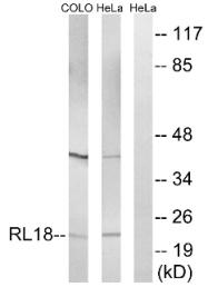 AP33222PU-N - RPL18