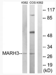 AP33225PU-N - MARCH3 / RNF173