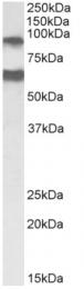 AP33235PU-N - ADAM12 / MLTN