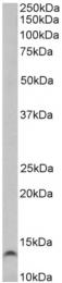AP33248PU-N - Trefoil factor 3 / TFF3