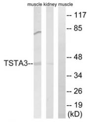 AP33267PU-N - TSTA3