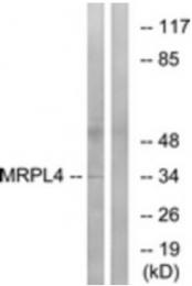 AP33269PU-N - MRPL4