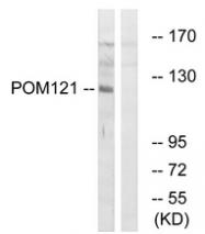 AP33272PU-N - POM121