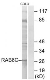 AP33280PU-N - RAB6C