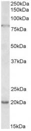 AP33303PU-N - OAS2