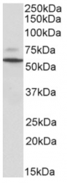 AP33347PU-N - Peripherin