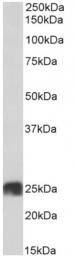 AP33354PU-N - ATP5F1