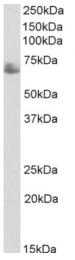 AP33355PU-N - TDP1