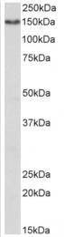 AP33433PU-N - CD13