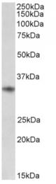 AP33441PU-N - CD74