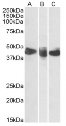 AP33445PU-N - CD27