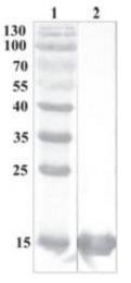 AP33452PU-N - CDNF