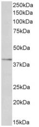 AP33494PU-N - OLR1 / LOX1