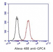AP33507PU-S - Glypican-4 (GPC4)