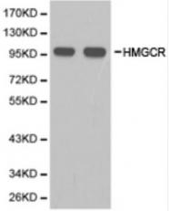AP33510PU-N - HMG-CoA reductase / HMGCR