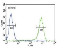 AP33512PU-N - 14-3-3 protein sigma / SFN