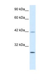 AP42022PU-N - KLF9
