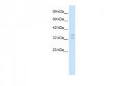 AP42023PU-N - POU1F1