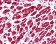 AP42040PU-N - Vacuolar-sorting protein SNF8