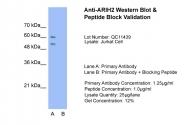 AP42290PU-N - ARIH2 / TRIAD1