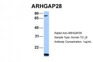 AP43895PU-N - ARHGAP28