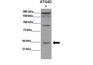 AP45920PU-N - APG4D / ATG4D