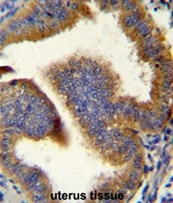 AP50807PU-N - Cyclin B1