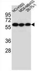 AP50907PU-N - CHRNA10