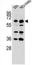 AP50934PU-N - CKAP4