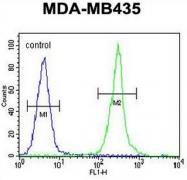 AP50943PU-N - Claudin-16 / CLDN16