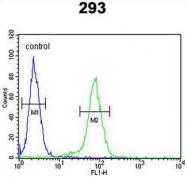 AP50952PU-N - Claudin-8 / CLDN8