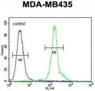 AP50955PU-N - CD301 / CLEC10A