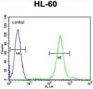 AP50986PU-N - Cornichon homolog 2