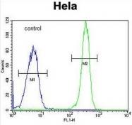AP51015PU-N - Collagen type IV alpha 2 chain