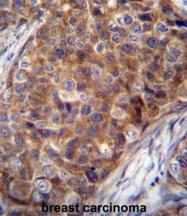 AP51037PU-N - COX VIIa related protein