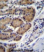 AP51133PU-N - Cathepsin O