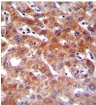 AP51164PU-N - CYP1A2