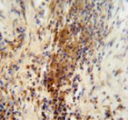 AP51290PU-N - DNAJC11