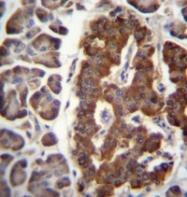 AP51315PU-N - Dermatopontin