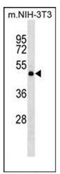 AP51318PU-N - Dopamine D2 receptor