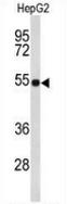 AP51375PU-N - Fibulin-4