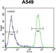 AP51440PU-N - HIF2A / HIF2 alpha