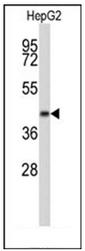 AP51453PU-N - ERGIC3