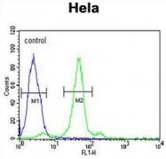 AP51696PU-N - Folate receptor alpha