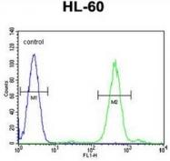 AP51704PU-N - FOXC2 / FKHL14 / MFH1