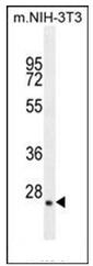 AP51820PU-N - Hepatopoietin