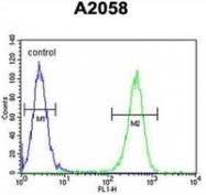 AP51823PU-N - GFPT2 / GFAT2