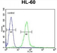 AP51830PU-N - Gamma-glutamyl hydrolase / GGH