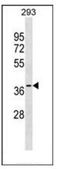 AP51831PU-N - GGPP synthetase
