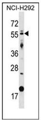 AP51852PU-N - GLIS2
